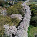 続報!西尾クラスとさいたま市の共同制作・見沼田んぼの桜回廊のPV映像ロングVer.公開!